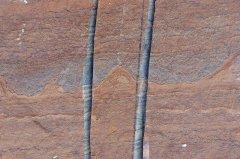 GreenlandFossils