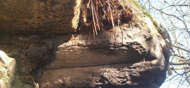 Fossil tree at Rouken Glen