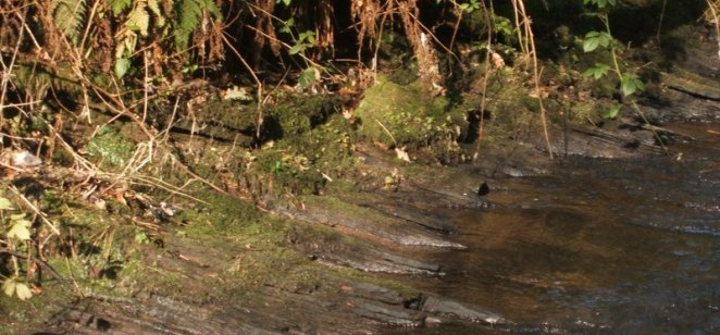 Layered bedding in river at Rouken Glen
