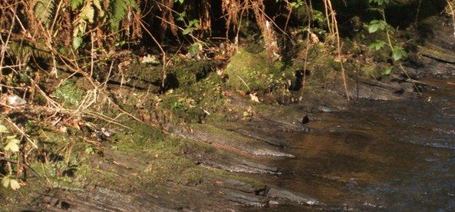 Layered bedding in river at Rouken Glen