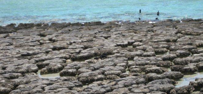 Living stromatolites in Shark Bay, Western Australia